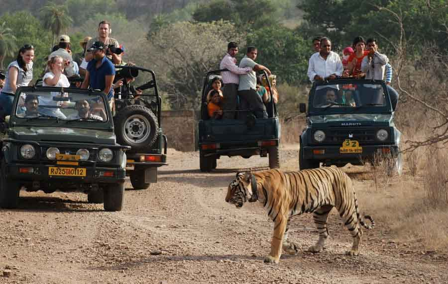 pench-national-park-6