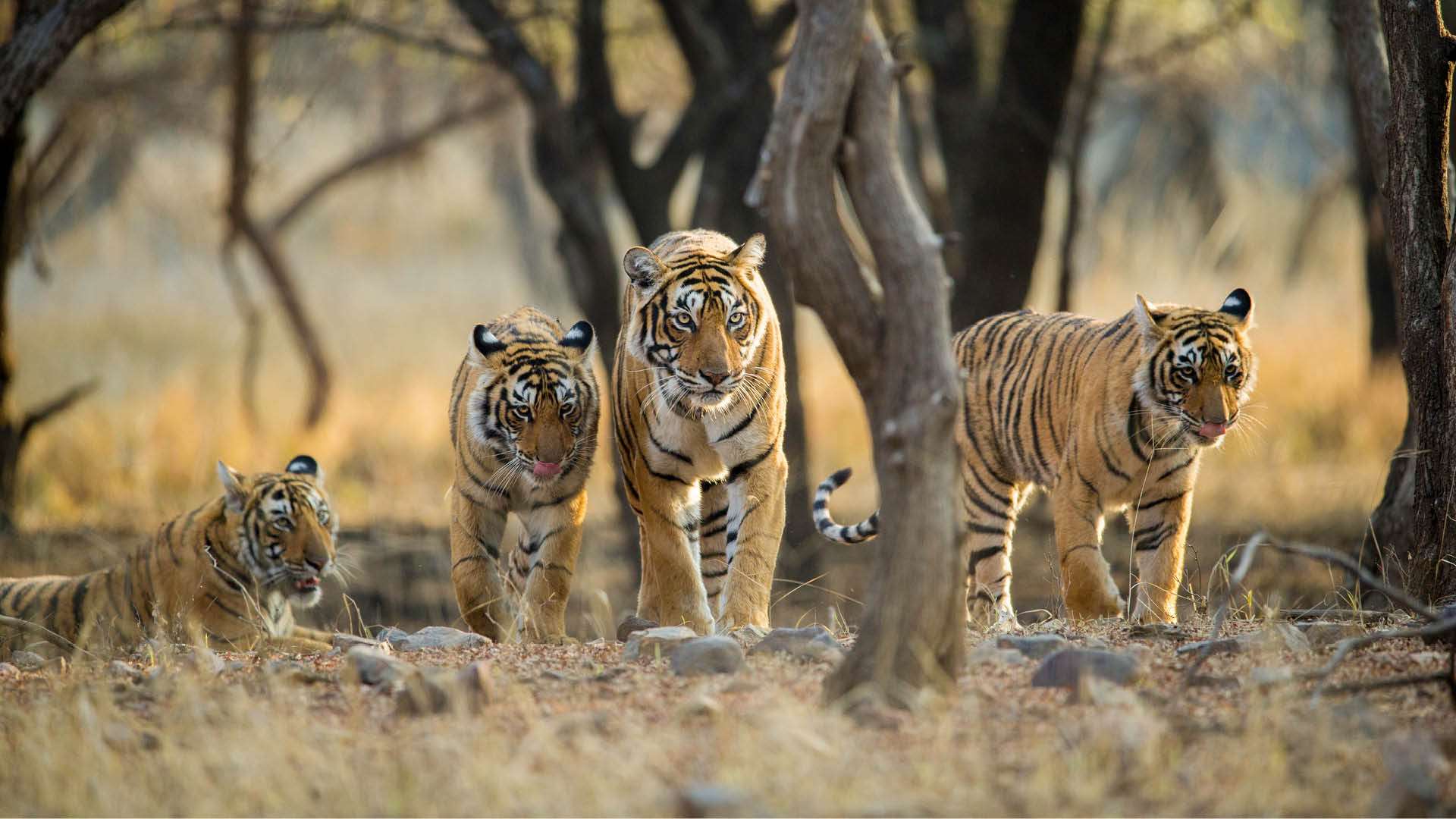 bandhavgarh-national-park